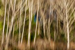 8  _DSC2350 (Betty Johnston) Tags: sointula malcolm island bc british columbia west coast