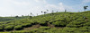 PhotAsia - Thekkady, Kerala, India (Photasia) Tags: harrisonsmalayalam india kerala khekkady photasia southindia christmas pattumallay teaplantation travelphotography