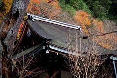 Roof and Autumn (tez-guitar) Tags: architect roof autumn autum 紅葉 autumn leaves tree trees wood temple forest kyoto oohara pentax pentaxart