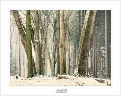 wintertime (Zino2009 (bob van den berg)) Tags: forest winter snow first 2017 walk woman alone dog path netherlands