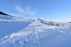PHO_0183 (Dimi_M) Tags: neige soleil nature foret