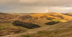 Pentlands Sunrise, Rainbow over Harbour Hill (jasty78) Tags: pentlands edinburgh lothians scotland nikon d5200 tokina1116mm sunrise rainbow turnhousehill
