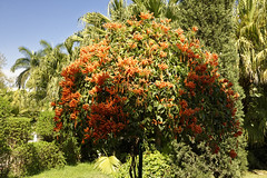 _DSC2060_DxO (Alexandre Dolique) Tags: d810 inde udaipur rajasthan saheliyonkibari princesses garden jardin india honeysuckle chèvrefeuille