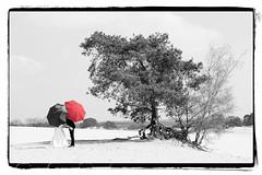 Wedding (♥siebe ©) Tags: wedding bride bruid groom couple bruidspaar tree umbrella