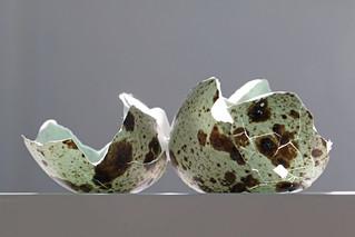 Quail's egg shell