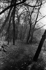 (|Digital|Denial|) Tags: kodakdoublex cinemafilm 35mm analog diy minolta x700 autumn blackandwhite riverbank winnipeg river autmn leaves trees
