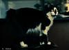 08032017-DSC_6394 (Fabian.Rubio) Tags: independencia santiago chile gatos gatita mascotas pets catlovers