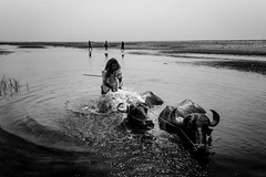 life at Padma (Extinted DiPu) Tags: canon canon700d 1855 lifestyle lifestyleofbangladesghipeople lifescape life dailylife buffalo water bath sun day outdoor outside monochrome horn river padma bangladesh kushtia man scout exploring explore inexplore indoor moment