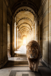 Leo Louvre...