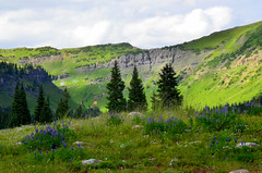 Alpine Bowl - Above Irwin Lake, Crested Butte (George Reader DC) Tags: flowers mountains nature landscapes colorado creation wildflowers wilderness americanwest crestedbutte sanjuanmountains gunnison