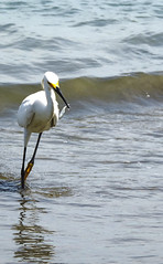 Time to lunch (JONE-MAN) Tags: wild fish bird heron nature birds animals colombia cartagena