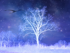 IMG_2785+6816 flying away (pinktigger) Tags: blue tree bird stars fly purple magic sly stork enteredinsyb