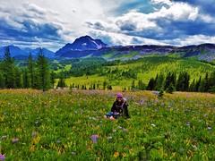 7-094 (Gnarlene) Tags: flower hiking banff healypass monarchramparts