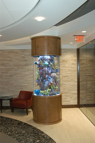 225 gal. SW Fish only Display - Corporate Office - Boston - 1