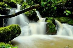 Little waterfalls-Amazon Region (Galo Andrés) Tags: