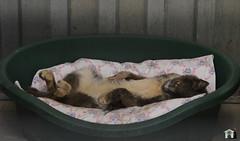 Frulla (.Vale.) Tags: cats baby animals cat kitten feline kitty kittens gatto gatti rifugio micio micia gattino gatta catshelter gattini micini
