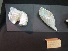 PCOC 2015 – Exhibits (Pentadactyl Mammal) Tags: origami pleats pleating pcoc2015
