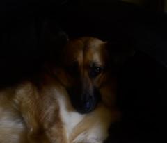 Sleepyhead (Dinky_D_) Tags: original shadow dog colour photography nikon exposure sleepy sleepyhead relaxed depth originalphotography