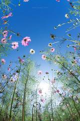 colorful sky (Yusukiy) Tags: sony sigma15mmf28exdgdiagonalfisheye sony7 sony7ilce7 7ilce7