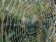 Cobwebs (dinghysailor2002) Tags: spider web cobweb dew cobwebs