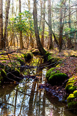 Sun Stream (GPhace) Tags: trees newyork fall nature forest canon moss stream farm upstatenewyork catskills dslr naturalbeauty sullivancounty 2015 canonef50mmf18ii canoneos5dmarkiii 5dmiii