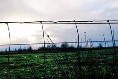 Hek (MJ Klaver) Tags: fence grid 24mm raster hek primelens fencedfriday canonefs24mmf28stm