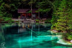 Unique (BeNowMeHere) Tags: trip travel blue lake fish alps nature colors forest landscape schweiz switzerland colours suisse swiss unique bluelake berneseoberland shadesofblue blausee 500px ifttt