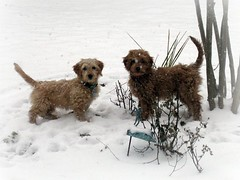 sisters-sadie-and-luna--soooo-cute--they-are-ginger-and-buddys-girls-_4328671687_o