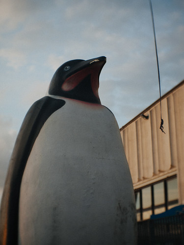 The Penguin!