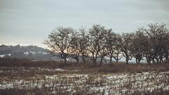 Winter_27 (losing.today) Tags: nature oregon outdoors pacificnorthwest portland pdx portlandor portlandoregon cold coldseason winter trees