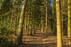 Sunlight & Shadows At Hurcott Nature Reserve (williamrandle) Tags: shadows light sunlight golden hurcott hurcottpoolnaturereserve woods woodland trees plants forest serene outdoor landscape uk winter 2016 england worcestershire nikon d7100 tamron2470f28vc tree plant