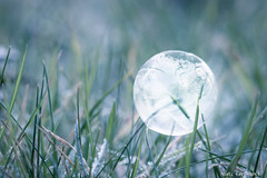Frozen Bubble (-+Niels+-) Tags: soapbubble frozen ice green grass belowzero cold snow 2017 experiment icecrystal