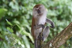 DSC_3001 (olyaterekhova) Tags: nature singapore bukit timah park animals