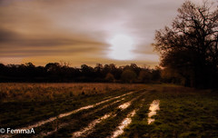 Sunset over a field. (femmaryann) Tags: reflectionreflections puddles shining wet grass trees outdoors nature natural constable plough furrow farmed