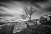 Keep on holding on (Pete Rowbottom, Wigan, UK) Tags: tree trees lonetree lonely outdoor rocks rocky winskill settle stainforth malham northyorkshire longexposure longexposurelandscape blackandwhitelongexposure gnarly baretree winter winterlandscape snow mountains ingleborough boulders glacial erratic glacialerratic mono monochrome blackandwhite blacknwhite blackcloud cloudmovement cloudscape streaks slowshutterspeed peterowbottom slowshutter nikond750 hillside yorkshirelandscape yorkshire yorkshiredales remote dramatic beautiful desolate langcliffe cravendistrict