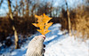 A Little Reminder Of What Was (John Westrock) Tags: winter leaf snow depthoffield nature trees forest path trail simmonswoodspark pewaukee wisconsin canoneos5dmarkiii canonef2470mmf28lusm