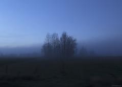 """""""langs de Dorpsstraat"""" (B.Graulus) Tags: photography belgium flanders kortenberg landscape evening winter trees scenery vlaanderen vlaamsbrabant belgië belgique landschap canon blue"""