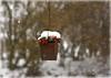 Schneeflockentanz (mayflower31) Tags: schnee snow schneeflocken garten herz heart winter
