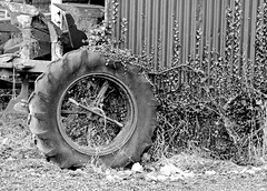 Old Tractor Tyre (wontolla1 (Septuagenarian)) Tags: mono black white tractor tyre cheshire shropshire union canal growing inthe gaps panasonic45200mmf456ois