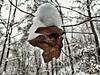 Not letting go (srdjandjordjevic) Tags: snow winter cold connection forest leaf