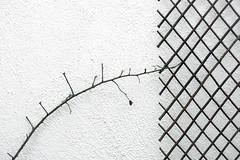 El rosal en invierno  - EXPLORE January 19th, 2017 (Micheo) Tags: spain blanco white pared wall frio invierno wintertime patio jardin explore ok best enredadera minimalismo
