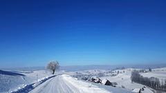 Clear blue sky (JohannesMayr) Tags: eriswil oberaargau kanton bern schweiz ahorn winter schnee strasse himmel blau street switzerland snow blue sky clear tree baum