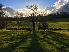 Tree Shadows (Marc Sayce) Tags: tree shadows clouds east worldham hampshire south downs national park hangers way winter january 2017