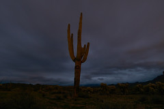 sOLACE sOUGHT iN a sONORAN sTORM 42 (wNG555) Tags: 2017 apachejunction apachetrail superstitionmountain superstitionwilderness desert cactus nightscape storm clouds rokinon14mmf28 arizona phoenix