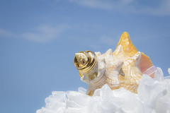 BODA DAYANA MI WEB-3 (amadoclarophoto) Tags: boda playa erick dayana 2014