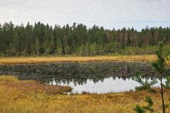 A pond (TimoOK) Tags: suomi finland pond woods hiking path route mets kuni lampi vaellus polku reitti ostrobothnia korsholm