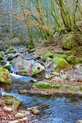 Stone Fish (Eurel Laugh) Tags: wood water forest automne grey gris eau pierre rivire savoie cascade fort haute d1700