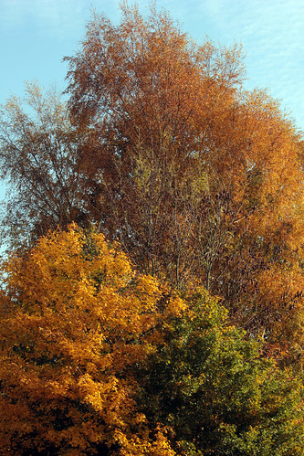 """Herbst • <a style=""""font-size:0.8em;"""" href=""""http://www.flickr.com/photos/69570948@N04/22360582899/"""" target=""""_blank"""">View on Flickr</a>"""