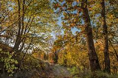 (zozoros) Tags: wood autumn fall trails autunno bosco sentieri