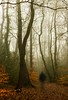 Winter Woods (Rob Pitt) Tags: walking fog cold winter morning rivacre valley blur misty cheshire wirral trees